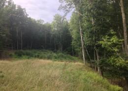 Preston forest
